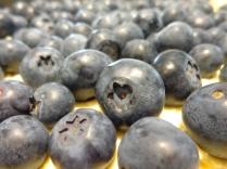 Gorgeous blueberries